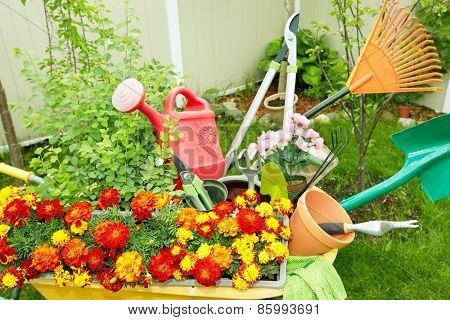 Flowers and Gardening tools in the garden.