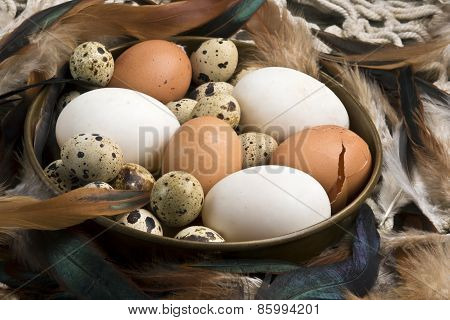 Fresh Duck, Hen And Quail Eggs