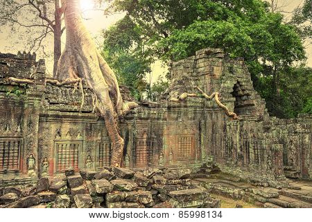 Ruins Of Ancient Temple Lost In Jungle With A Tree Growing Straight From The Top Of Construction