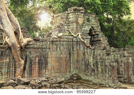 Ruins Of Ancient Temple With A Tree Growing Straight From The Top Of Construction