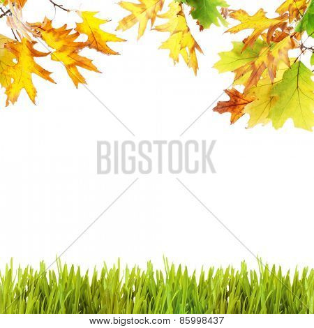 Beautiful autumn background with leaves and grass