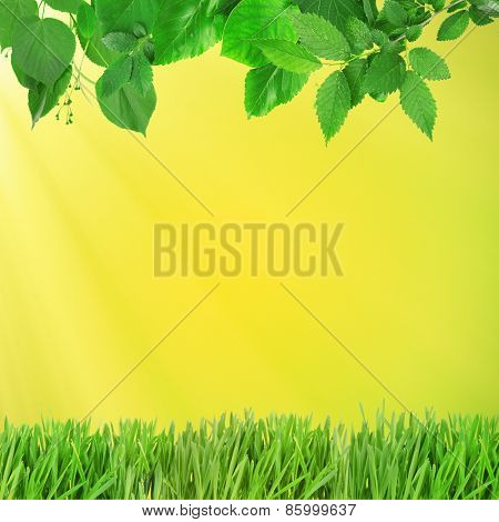 Beautiful spring background with leaves and green grass