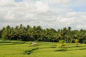 stock photo of nasi  - Indonesia  - JPG