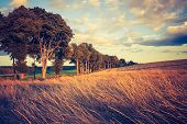 pic of grassland  - Landscape with withered grassland photographed in afternoon light - JPG