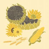 stock photo of sunflower-seed  - Greeting card includes yellow flower of sunflower - JPG