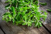 stock photo of origanum majorana  - bunch of raw green herb marjoram on a wooden rustic table - JPG