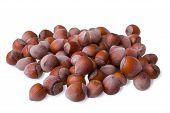 pic of hazelnut tree  - hazelnuts isolated on a white background closeup - JPG