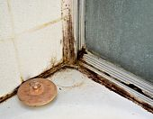 picture of spores  - Black mold growing on shower tiles in bathroom - JPG