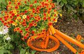 stock photo of petunia  - Garden art orange bicycle with huge bouquet of flowering petunias - JPG