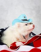 stock photo of ferrets  - Little cute ferret in a cowboy hat on the USA flag background