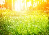 image of sunrise  - Fresh green grass field with bright sun light - JPG