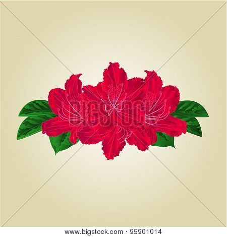 Bouquet Of Red Rhododendrons Vector