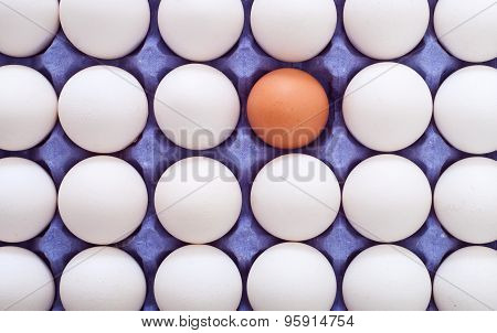 Egg In Carton
