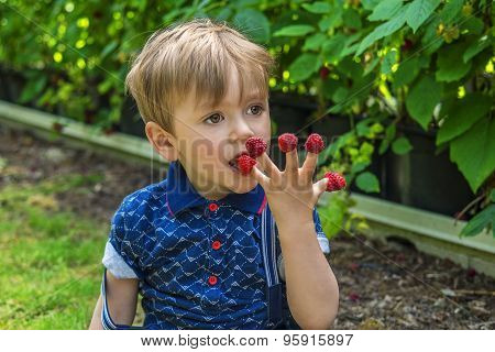 Beautiful Boy Eating Raspberries