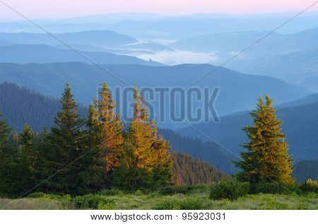 Fir forest in mountains. Morning landscape with fog in the valley. The first rays of the sun. Carpathian Mountains. Ukraine