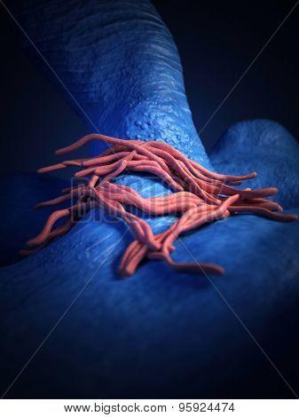 medical bacteria illustration of the legionella