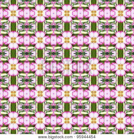 Beautiful Of Adenium Obesum Flower Seamless