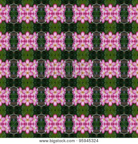 Bloom Of Pink Adenium Flower Seamless