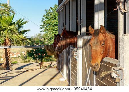 Brown Horses On A Farm
