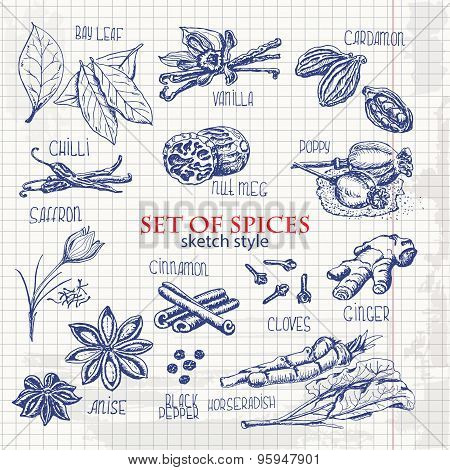 set of spices in sketch style on paper