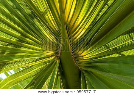 Palm Tree Leaves With The Sun Light Behind