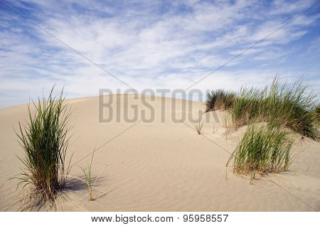 Sand Dunes With Vegetation
