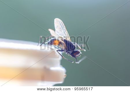 Housefly At Edge Of Plastic Bottle