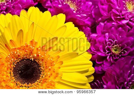 Colorful flowers composition