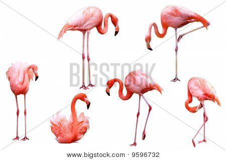 Flamingo-Set