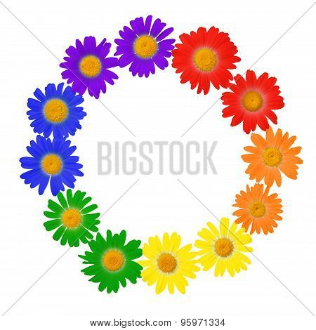Chamomile Concept Of Gay Culture Symbol, Lgbt Sign Is Isolated On White Background, Closeup