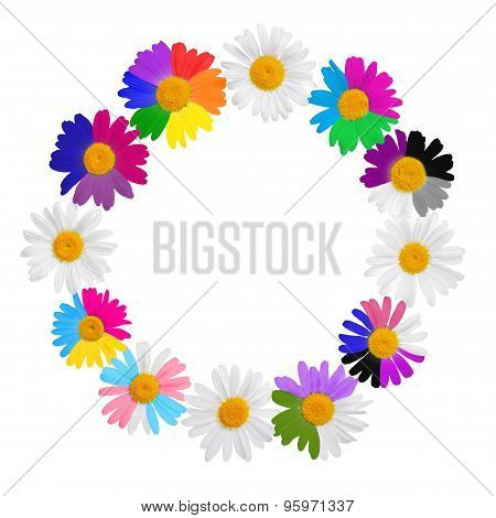 Chamomile Wreath Concept With Gay Culture Symbols, Lgbt Signs Is Isolated On White Background, Close