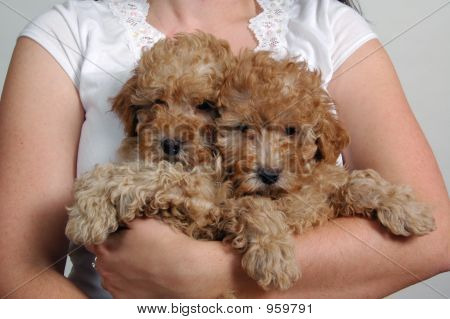 Holding Two Poodles