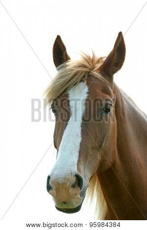 Portrait of beautiful brown horse, outdoors