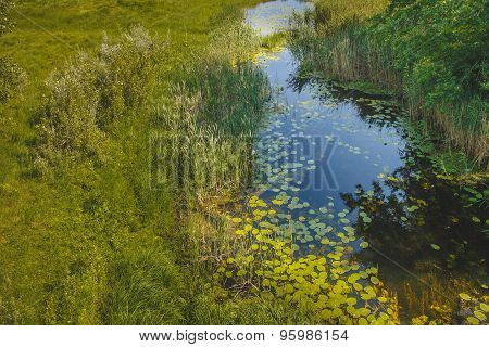 Russian River swamp  summer landscape green top view