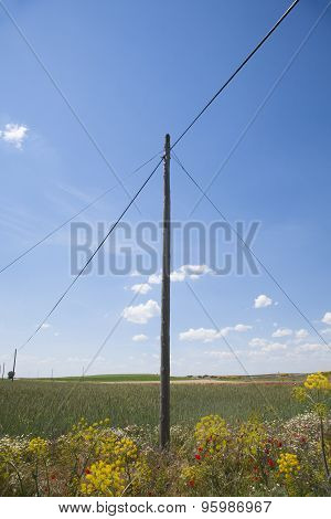 Ancient Telephone Pole