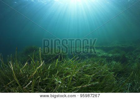 Underwater Green Seaweed