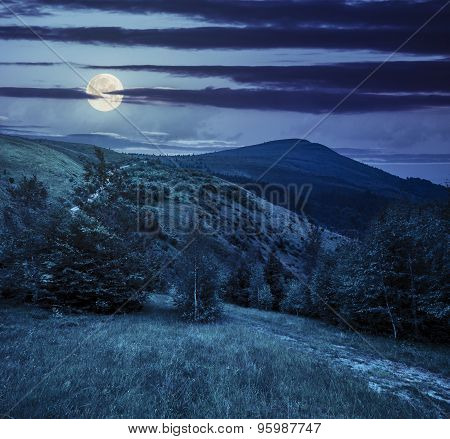 Path Through The Forest In Mountains At Night