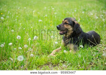 The Dog On The Grass