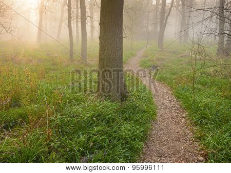 Sunrise Over A Path Into The Forest