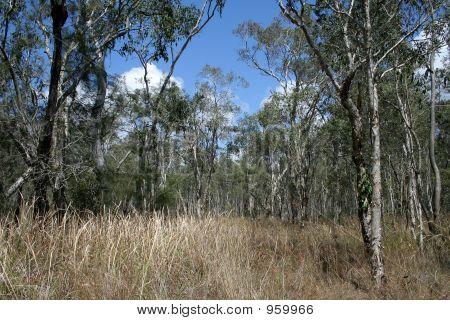 Dry Australian Bush Land