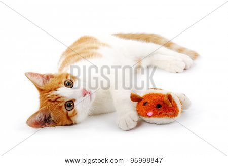 red kitten with mouse