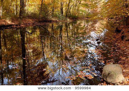 Stream im Herbst