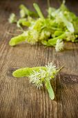 stock photo of linden-tree  - Blossoms of linden tree on wooden background  - JPG