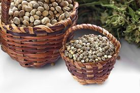 stock photo of seed bearing  - Two kinds of hemp seeds in small baskets and dried hemp leaves - JPG