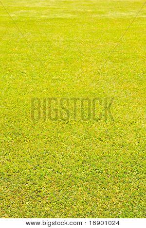 Wet Grass Texture Vertical Perspective