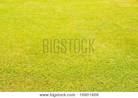 Nasses Gras Textur horizontale Perspektive