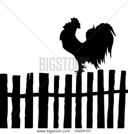 vector silhouette of the cock on old fence