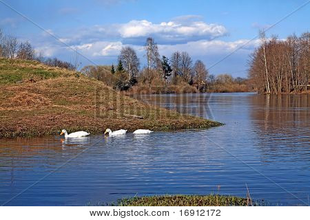 geese on river