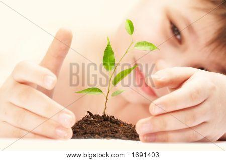 der junge beobachtet Anbau der junge Pflanze.