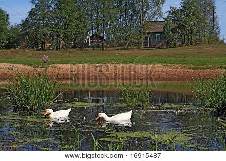 two geese on lake near villages